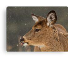 Winter Deer Portrait Canvas Print