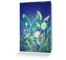 Queen Anne's lace 16 Greeting Card