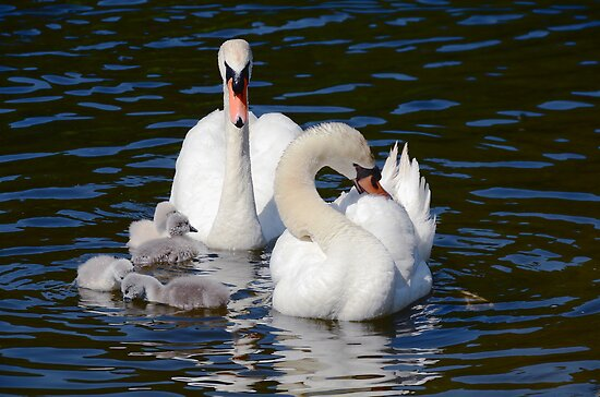 Proud Parents by Elaine  Manley