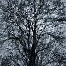 A Tree In A Dream by Peter O'Hara