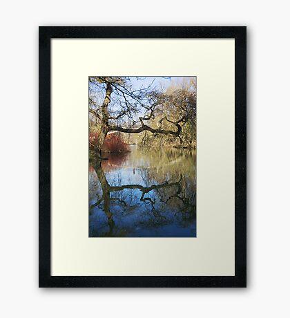Ye Olde Tree Framed Print