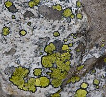 Lichen by Jeff  Farris