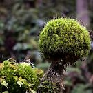 Moss Ball - Near the Strait of Juan de Fuca by Mark Heller