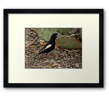 Lark Bunting (Breeding Male) Framed Print