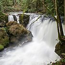 Whatcom Falls - Bellingham, WA by Mark Heller