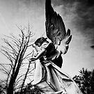Angels by Nikki Smith