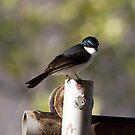Fly Catcher by Kym Bradley