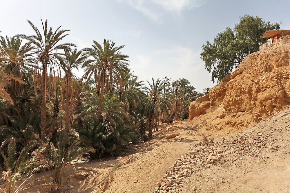 oasis of the desert by mrivserg