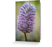 Macro Flower 4 Greeting Card