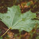 Water Drops On The Fresh Green Maple Leaf by GrishkaBruev