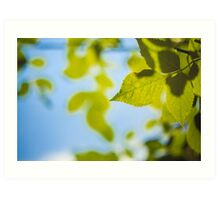 Green Leaves Against The Sky Art Print
