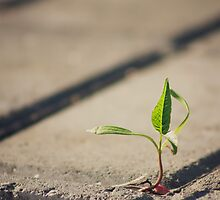 Tree Growing Through Crack In Pavement by GrishkaBruev