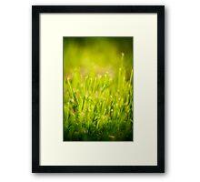 Fresh Spring Green Grass Framed Print
