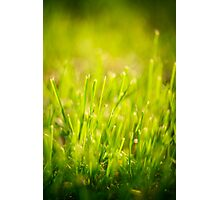 Fresh Spring Green Grass Photographic Print