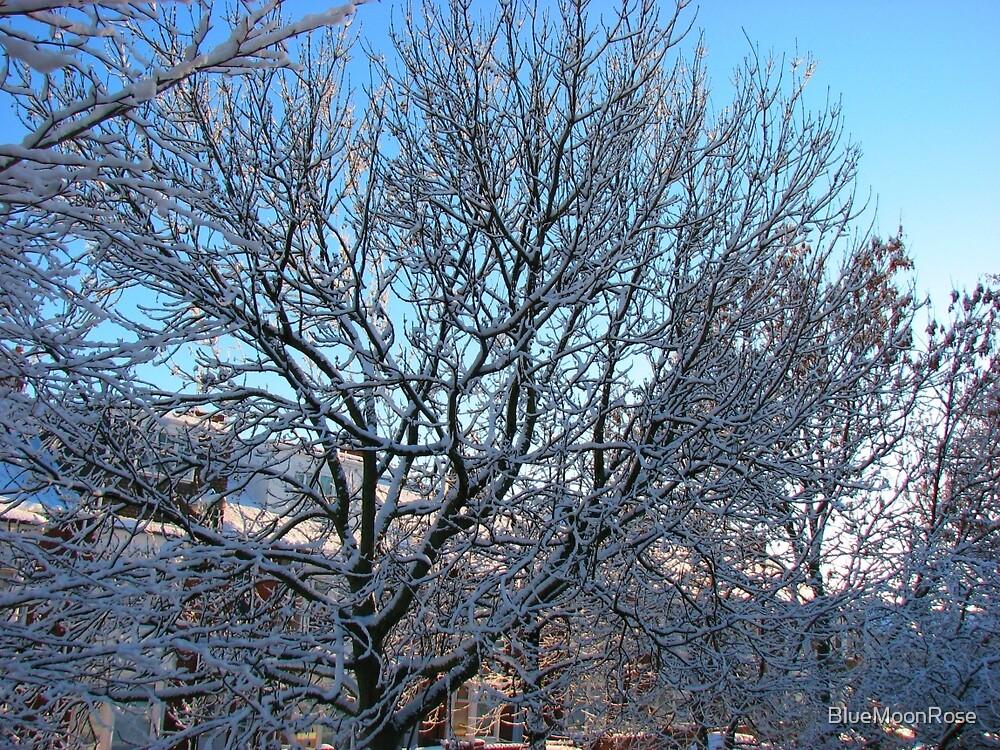 Winter Sunshine by BlueMoonRose