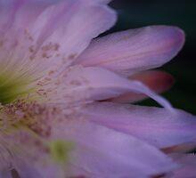 Moon Flower by Liz Worth