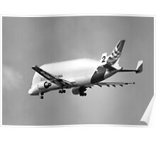 Beluga Transport Plane in B&W Poster