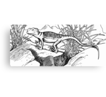 Happy Little Lizard Canvas Print