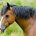 Chestnut Mare by Margaret S Sweeny