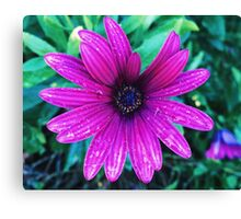 Bloom after the rain Canvas Print