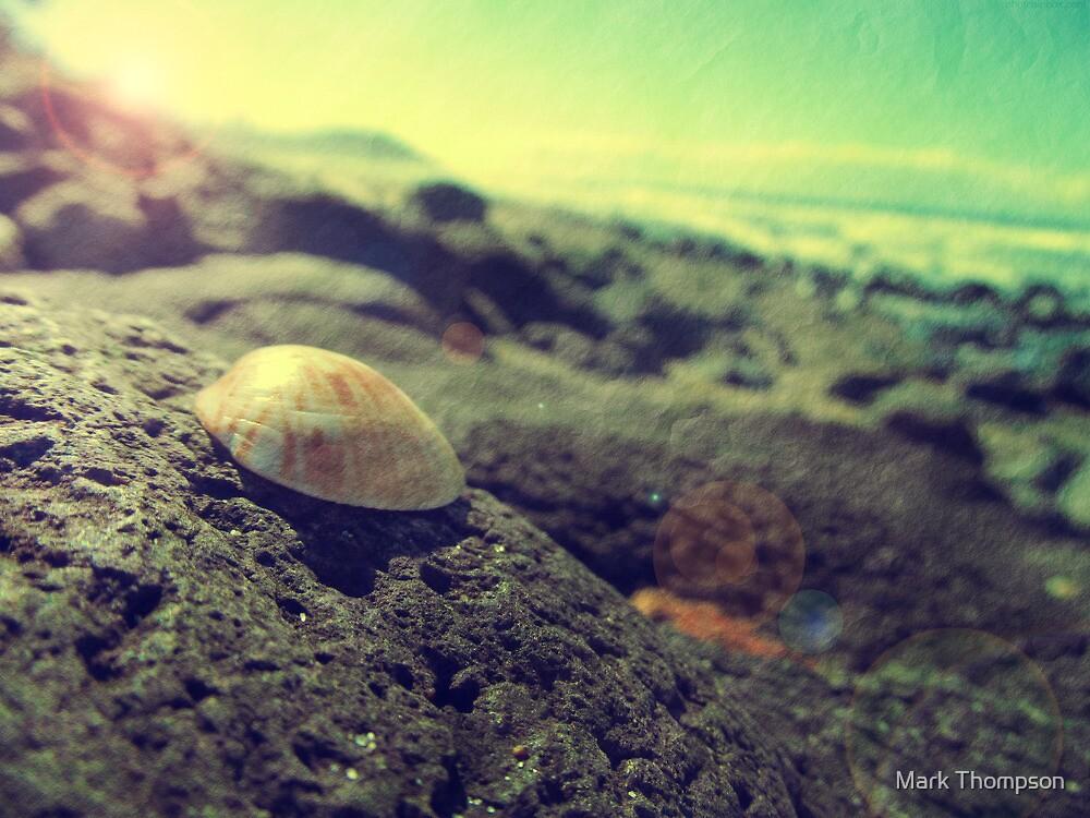 Shells sunshine by mark thompson
