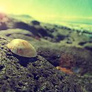 Shells sunshine by mark thompson