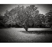 Big and large Photographic Print