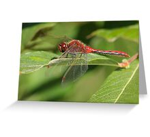 Vibrant Red Dragon Greeting Card