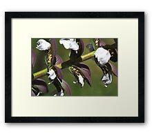 Oyster Plant In Bloom Framed Print