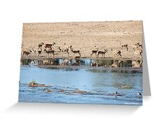 TRANQUILITY AND PEACE IN THE KRUGER NATIONAL PARK SOUTH AFRICA Greeting Card