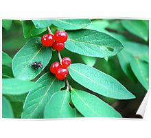 Berries and Bugs Poster