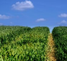 Wheat Field Bridleway by Fotomus-Digital