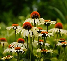 Vivid Cone Flowers by Renee Ellis