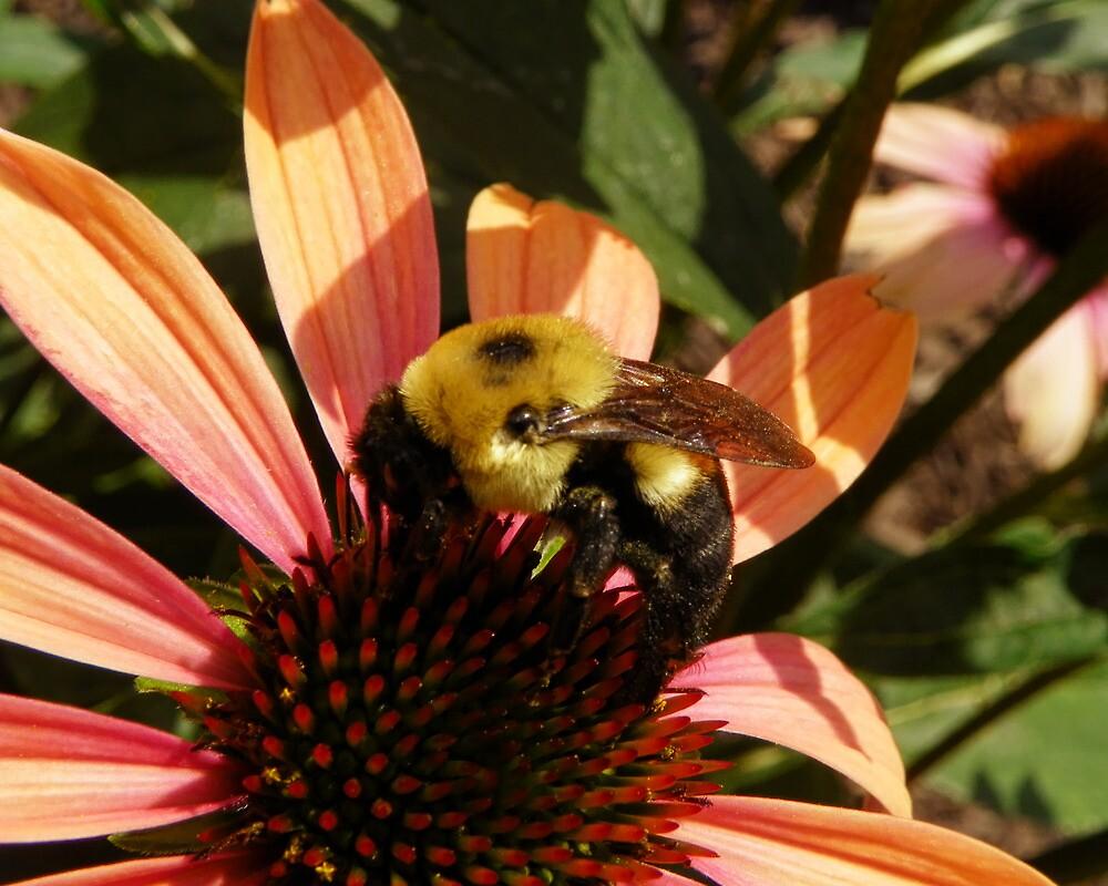 Feasting Bee by PineSinger