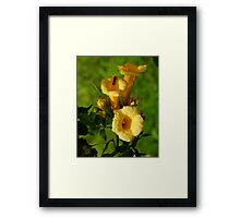 Yellow Trumpet Vine Framed Print