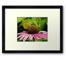 The Butterfly and the Fly Framed Print