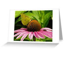 The Butterfly and the Fly Greeting Card