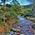 Spring Stream In Sedona by Diana Graves Photography