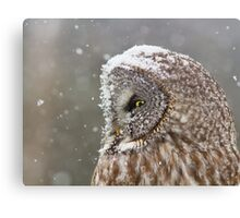 Lapland Profile Canvas Print