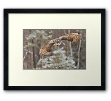Hunting Great Grey Owl Framed Print