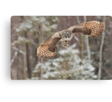 Hunting Great Grey Owl Canvas Print
