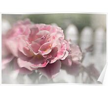 Romantic rose garden Poster