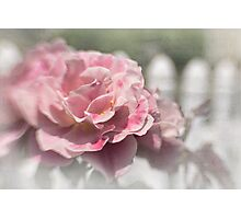 Romantic rose garden Photographic Print