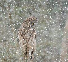 Winter Storm by MIRCEA COSTINA