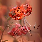 Hot Lily by Eileen McVey
