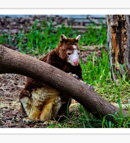 Matschie's Tree Kangaroo Sticker