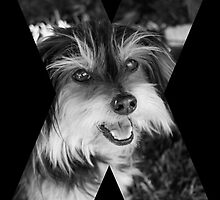 X Marks The Dog by Jodie Cooper