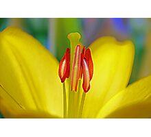 Macro Lily Photographic Print