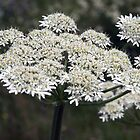Meadow Flower by Maureen Anderson