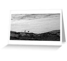 Oystercatchers, Barra Greeting Card